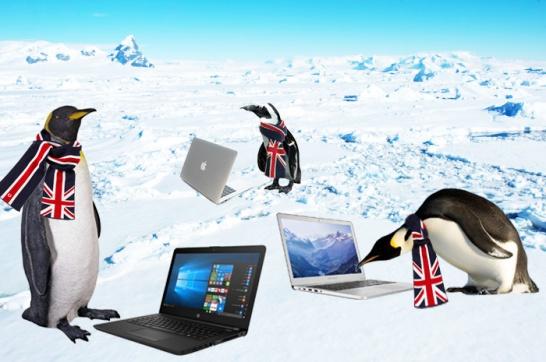 british-penguins
